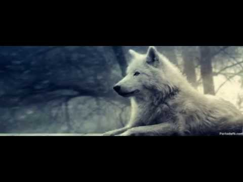 Alone Wolf-A sad Violin Song