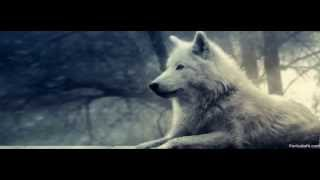 Alone Wolf-A sad Violin Song
