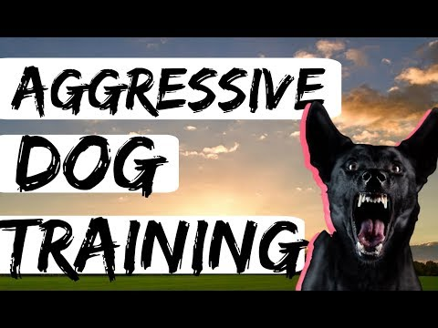 Barking Aggressive German Shepherd Behavior Modification Dog Training with Americas Canine Educator