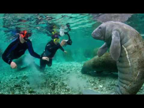 Best place to visit in Florida - Three Sisters Springs Silver Springs Florida USA
