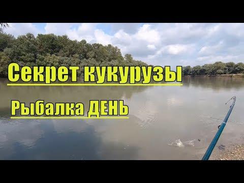 Рыбалка р.Протока-Кубань в августе!Что за РЫБА?