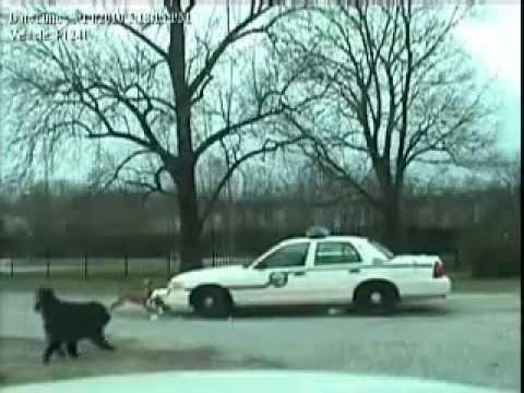 Dog [Pitbull] Attacks Police Car Rips Off Bumper!!
