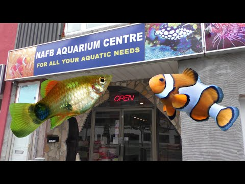 FAMILY RUN Aquarium Store Tour! Saltwater and Freshwater! NA