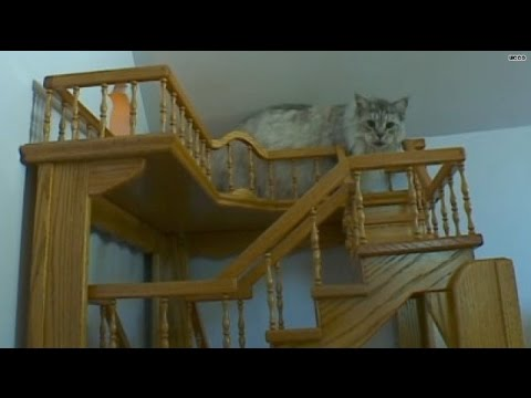 Purrfect! Man's cat heaven 15 years in the making