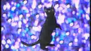 Приколы с котами: