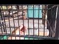 Ampuh Cara Mengatasi Burung Cendet Macet Bunyi Ngalas(.mp3 .mp4) Mp3 - Mp4 Download