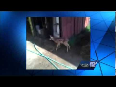 A dozen armed agents raid animal shelter to execute captive baby deer