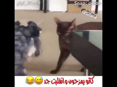 Funny animal cat and dog fight