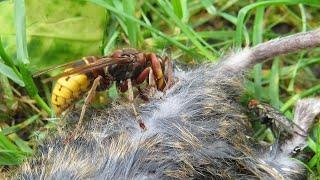 méhcsípés a szem elől a távollátás javítása