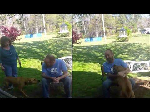 Cachorro demora para reconhecer o seu dono 20 kg mais magro