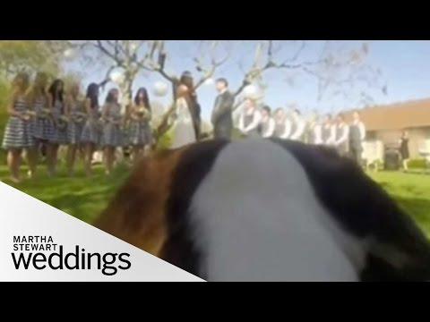 A Dog's Eye View of a Wedding Ceremony - Martha Stewart Weddings