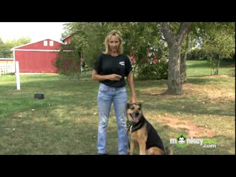 Dog Training - Teaching Your Dog to Heel Off Leash