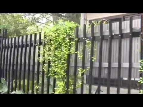 鎌倉百景ー今公路通り、御成小学校の歴史建築物と巨樹の並木