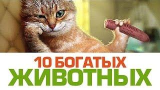 Топ 10 самых богатых домашних животных.
