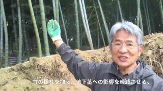 京都でも屈指の竹の子産地「長岡京」 200年に渡り、代々竹やぶを世話す...