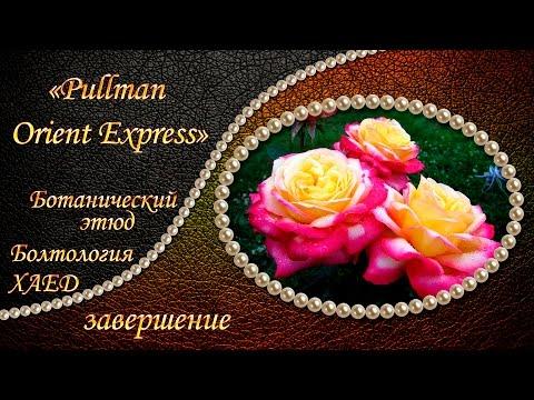 Вышивка: БОТАНИЧЕСКИЙ ЭТЮД Pullman Orient Express завершение Вышивка крестом: