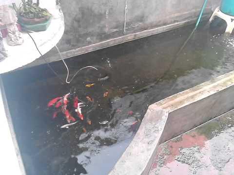 My mini concrete koi pond youtube for Concrete fish pond
