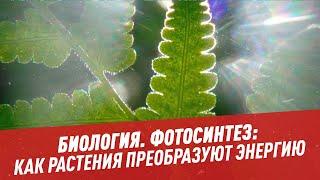 Биология. Фотосинтез: как растения преобразуют энергию - Школьная программа для взрослых