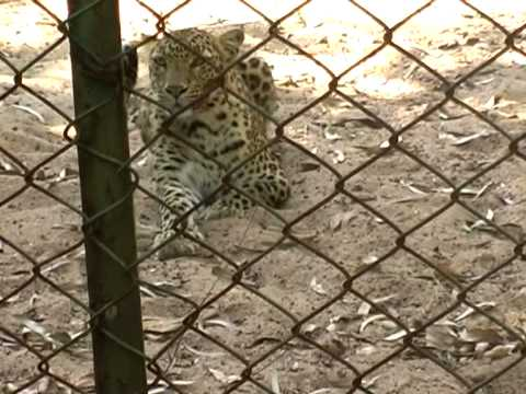 Pendari Kanan A Beautiful Animal Zoo Park of Bilaspur Chhattisgarh