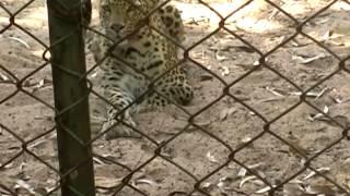 Pendari Kanan A Beautiful Animal Zoo Park of Bilaspur Chhattisgarh