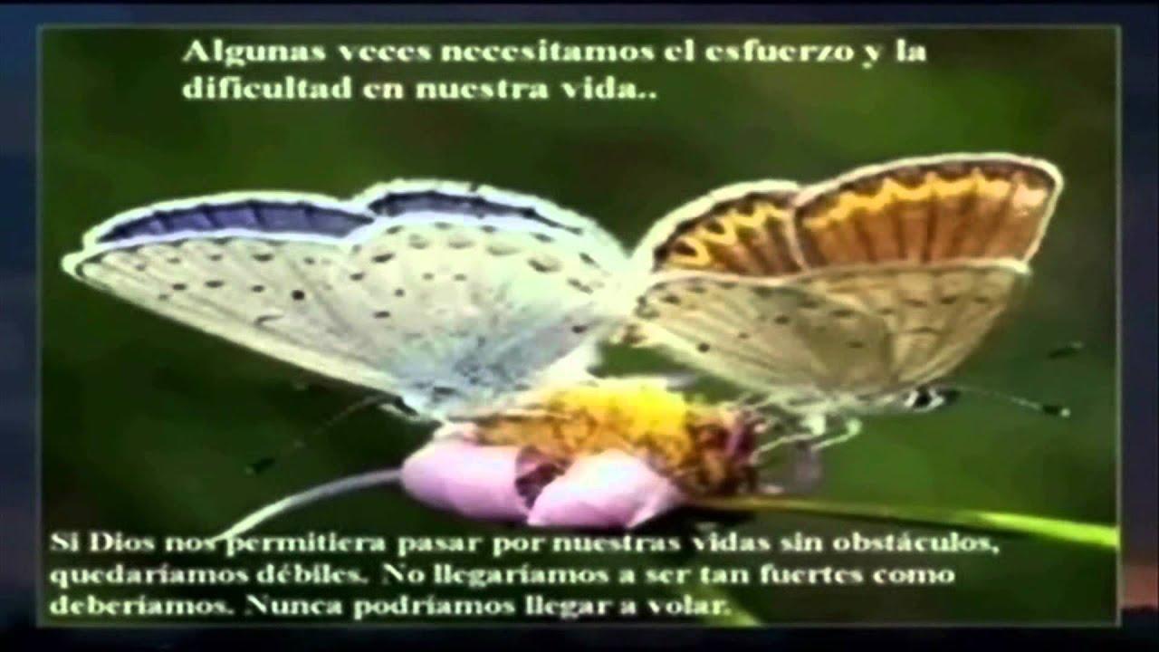 Reflexion La Leccion De La Mariposa Dedicado Para Mis Buenos Amigos