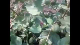 Plot Video pltvid Guj Raj Upl Bha 369 P2 S1 03Nov12132648 V0