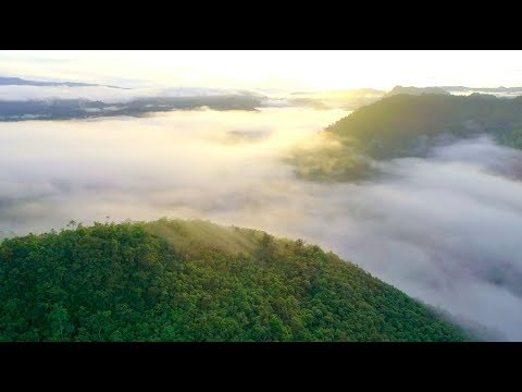 The Establishment of West Papua Province as A Conservation Province