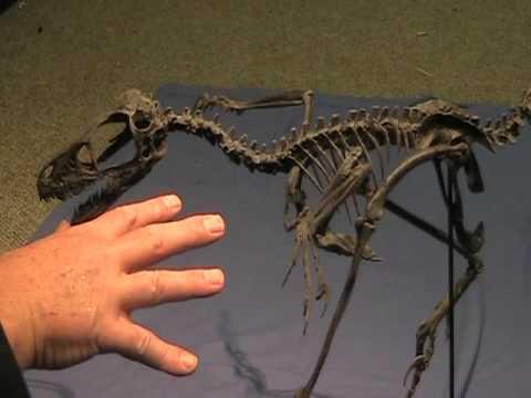 DinoBirds