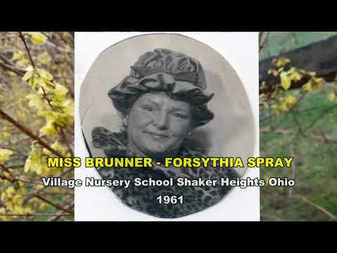 Miss Brunner - Forsythia Spray - Village Nursery School Shaker Heights Ohio 1961