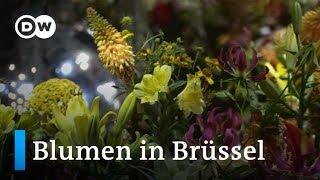 Blumenmeer im Brüsseler Rathaus   Euromaxx