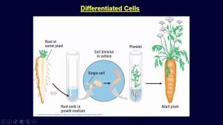 Cancer (Gene Therapy, Stem Cells, and Cloning)
