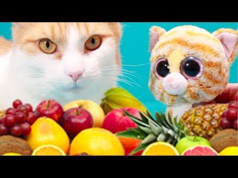 Cute cat Simba and George   Bellboxes   Food art   Funny cat