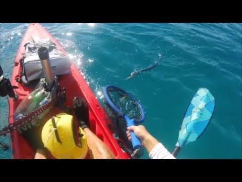 Hawaiian Needlefish (aha) Safety Video