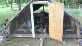 Chicken Tractor 05-25-2012