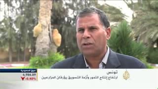 ارتفاع إنتاجية التمور بتونس ومخاوف تسويق الفائض