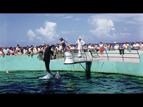 1950's Jacksonville Beach video surfaces online