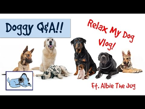 Relax My Dog Q&A! Most Expensive Dog Breed, Pomeranians or Pugs and Much More! 🐶 #QAVLOG02