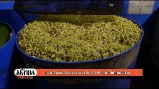 ปลูกถั่วงอกขายได้เงินล้าน (วีกเอ็นด์ ฟาร์ม) : มติชน วีกเอ็นด์ 31 ก.ค. 59