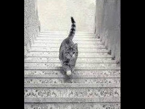 Is This CAT Going UP or DOWN These Stairs ? The Answer Is ...