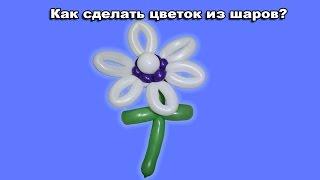 Как сделать цветок из шаров?