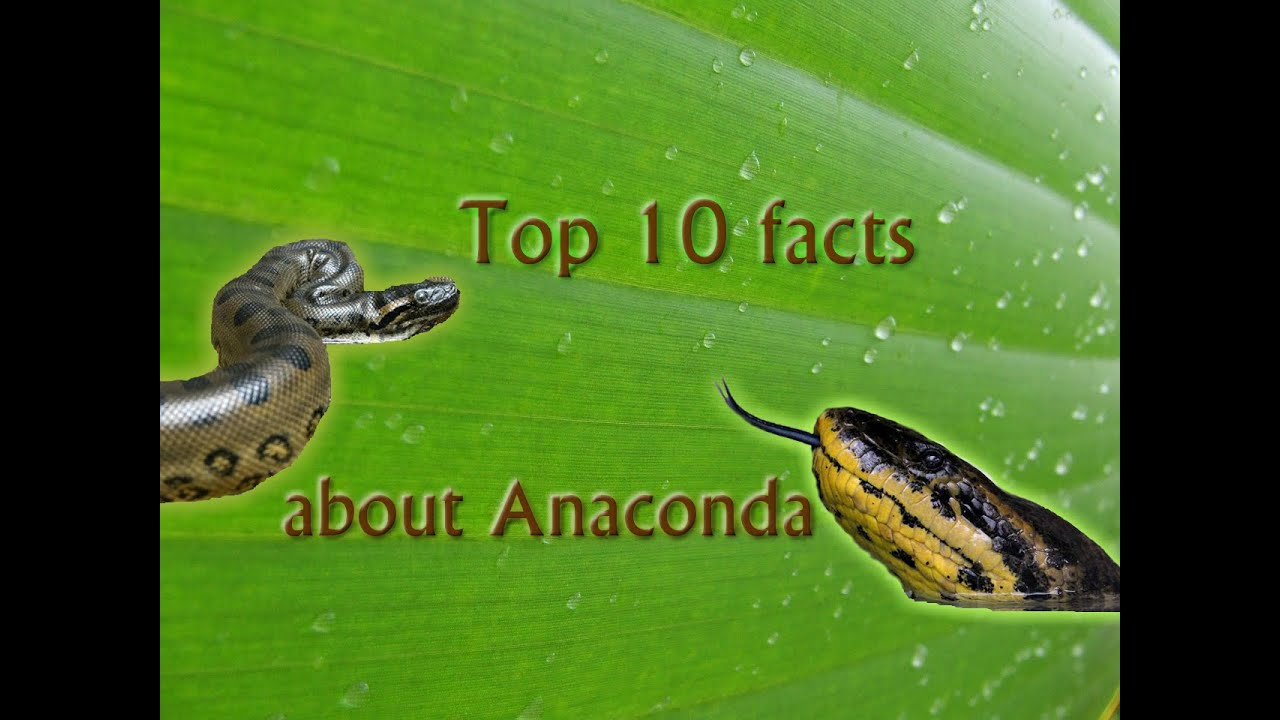 Information About Anaconda