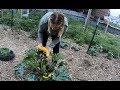 1 Month In : Garden Update