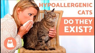 Are There Really HYPOALLERGENIC CAT BREEDS? 🐱