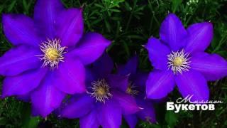 Красивые Цветы от магазина Миллион Букетов(Наш магазин цветов Миллион Букетов предлагает самые красивые и свежие цветы и букеты от лучших флористов..., 2017-01-24T14:41:16.000Z)