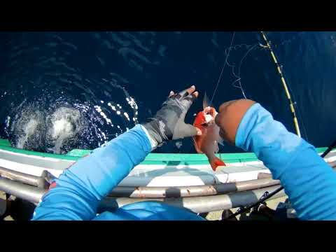 Vermillion Snapper Fishing On Galveston Party Boats 82220