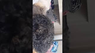 Publication Date: 2019-07-07 | Video Title: 天佑小學的王洛瞳你看到我在家裏,我和我的小狗玩,王洛瞳我愛你