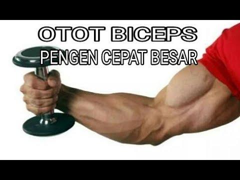 Latihan otot biceps dengan beban ringan tpi hasil cepat gede / fitnes pemula / otan gj