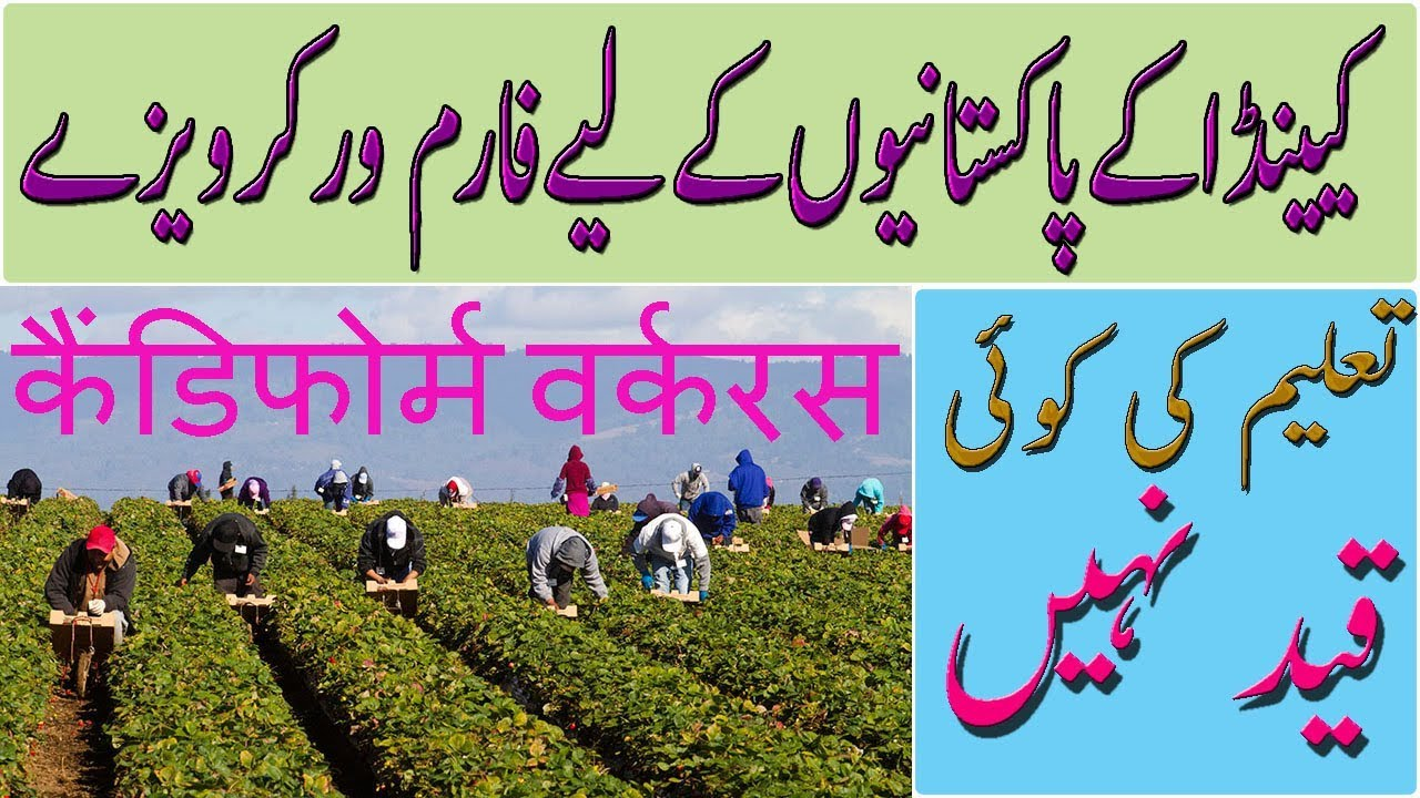 Canadian Immigration latest news, Canada Fruit Picker and Farm Worker Visa  2018