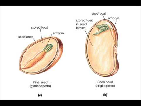 what is seed germination process