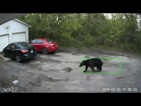 The KFAN Bits Page - The Famed Arden Hills Black Bear was in Engineer Jared's Yard! [VIDEO]